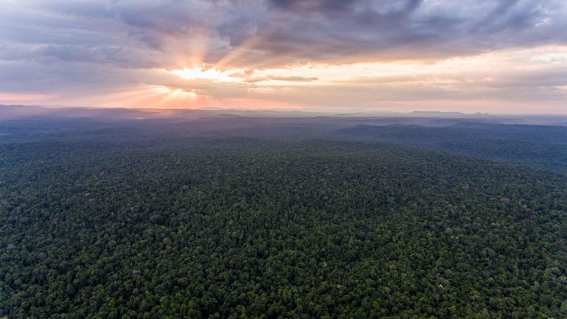 REDD Plus Wildlife Alliance in Cambodia