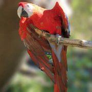 Oak Harbor Veterinary Hospital: Parrot