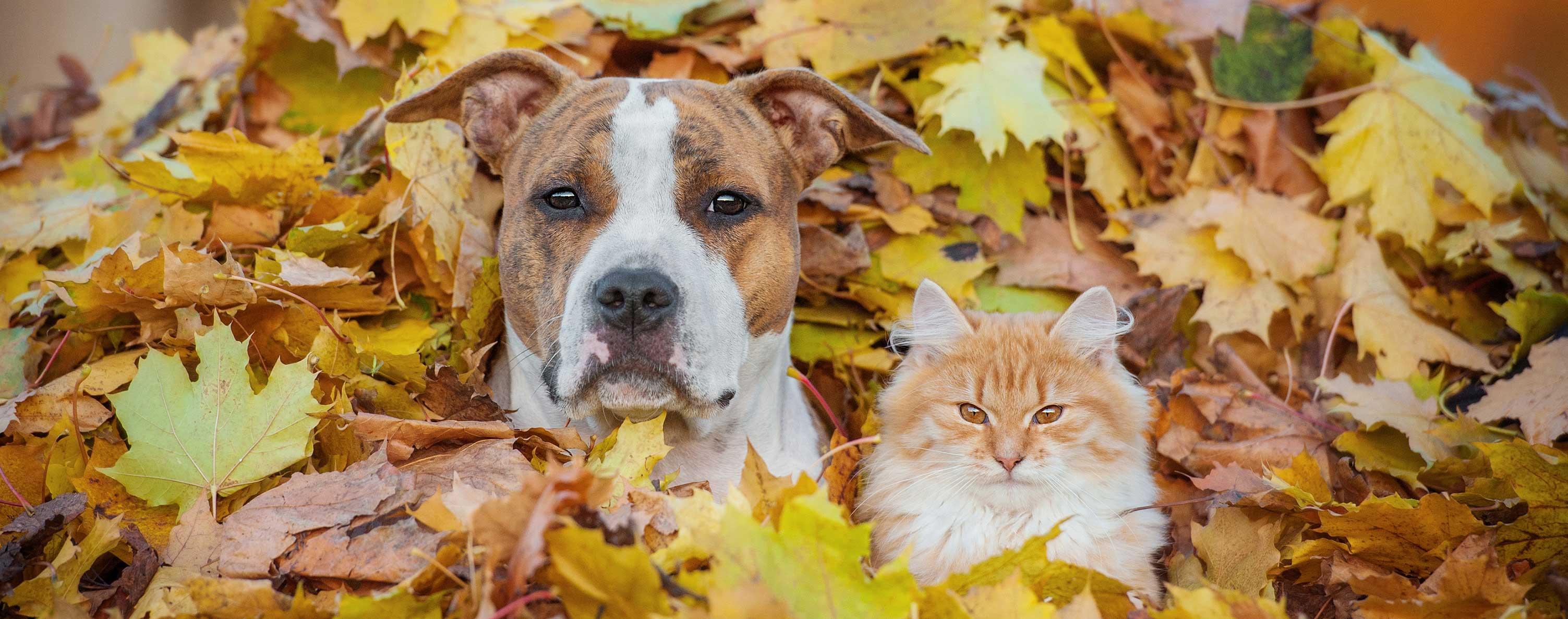 Dog, Cat, Fall Leaves
