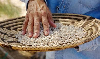 Amazing Tepary Beans