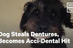 Denture-Stealing Puppy Becomes Internet Sensation | NowThis