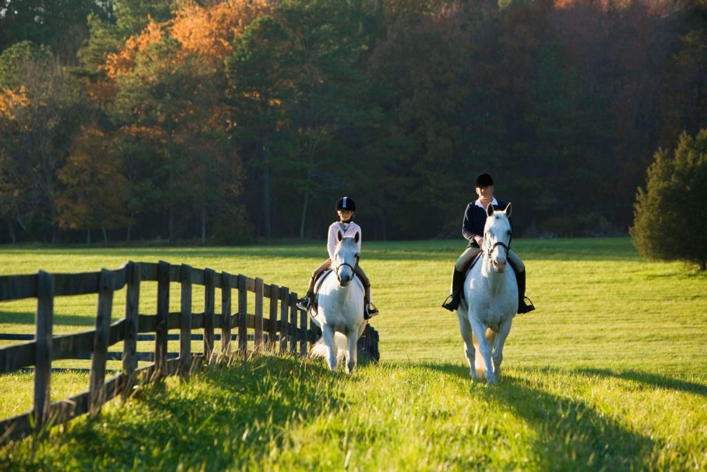 riding along fence line in fall