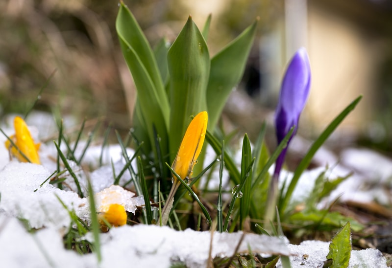 How to Prevent Home Water Damage During Spring Thaw