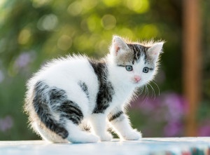 Read more about the article 13 Common Pet Emergencies That Need Immediate Attention