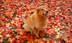 Dog sitting in leaves