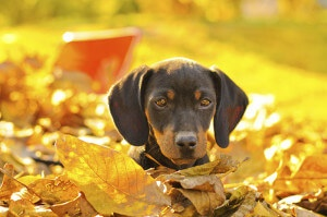 Small Dog Peeking Out of Leaves
