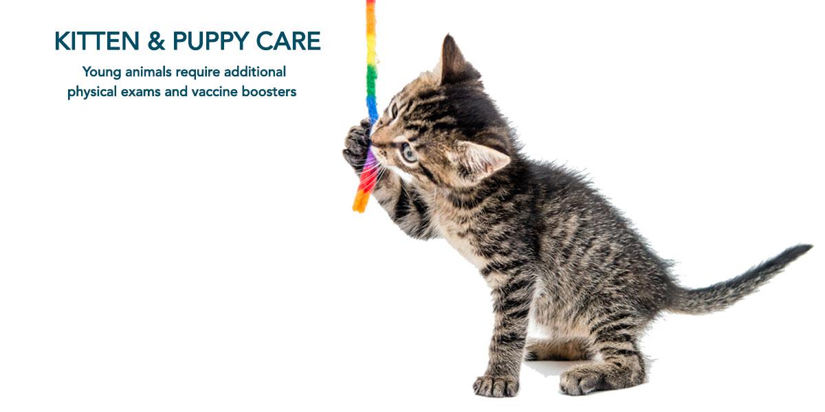 Kitten-Puppy Care