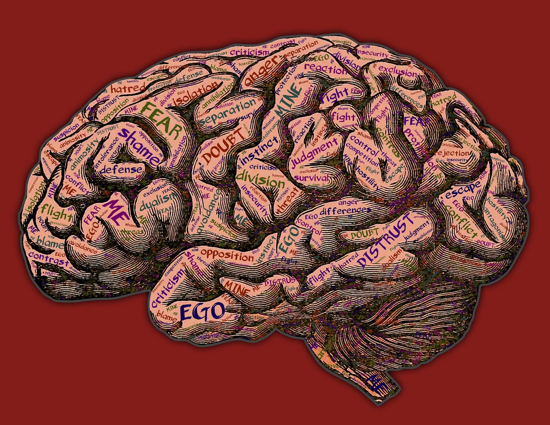 Neuroleadership
