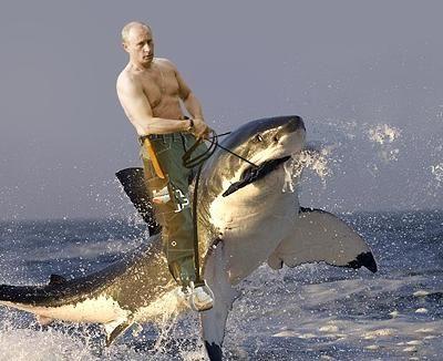 Vladimir Putin Rids a Shark
