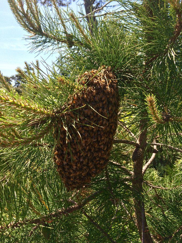 Swarm on a tree