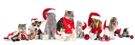 Pets Dressed up for Christmas