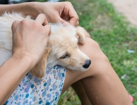 Protect Your Pets From Fleas