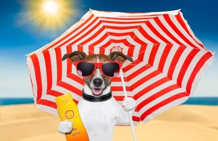 Keeping Fun In The Sun Safe For Your Dog