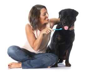 Pets For Teeth Brushing