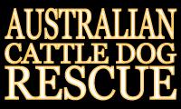 Australian Cattle Dog Rescue