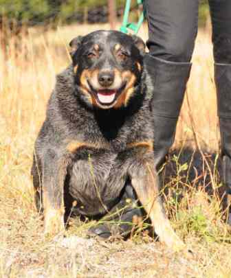 TED, Blue Male ACD, 5YO Approx