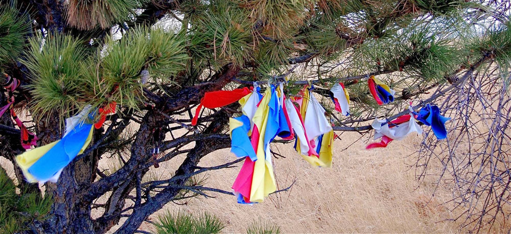 Pine tree with prayer flags.