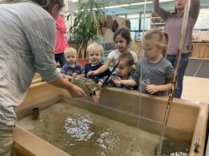 Lowcountry Field Trips visited the UGA Aquarium touch tanks.