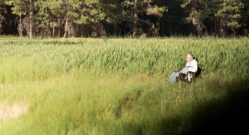 Gale in a beautiful green field