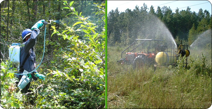 A properly maintained right-of-way courtesy of Progressive Solutions' skilled herbicide applicators