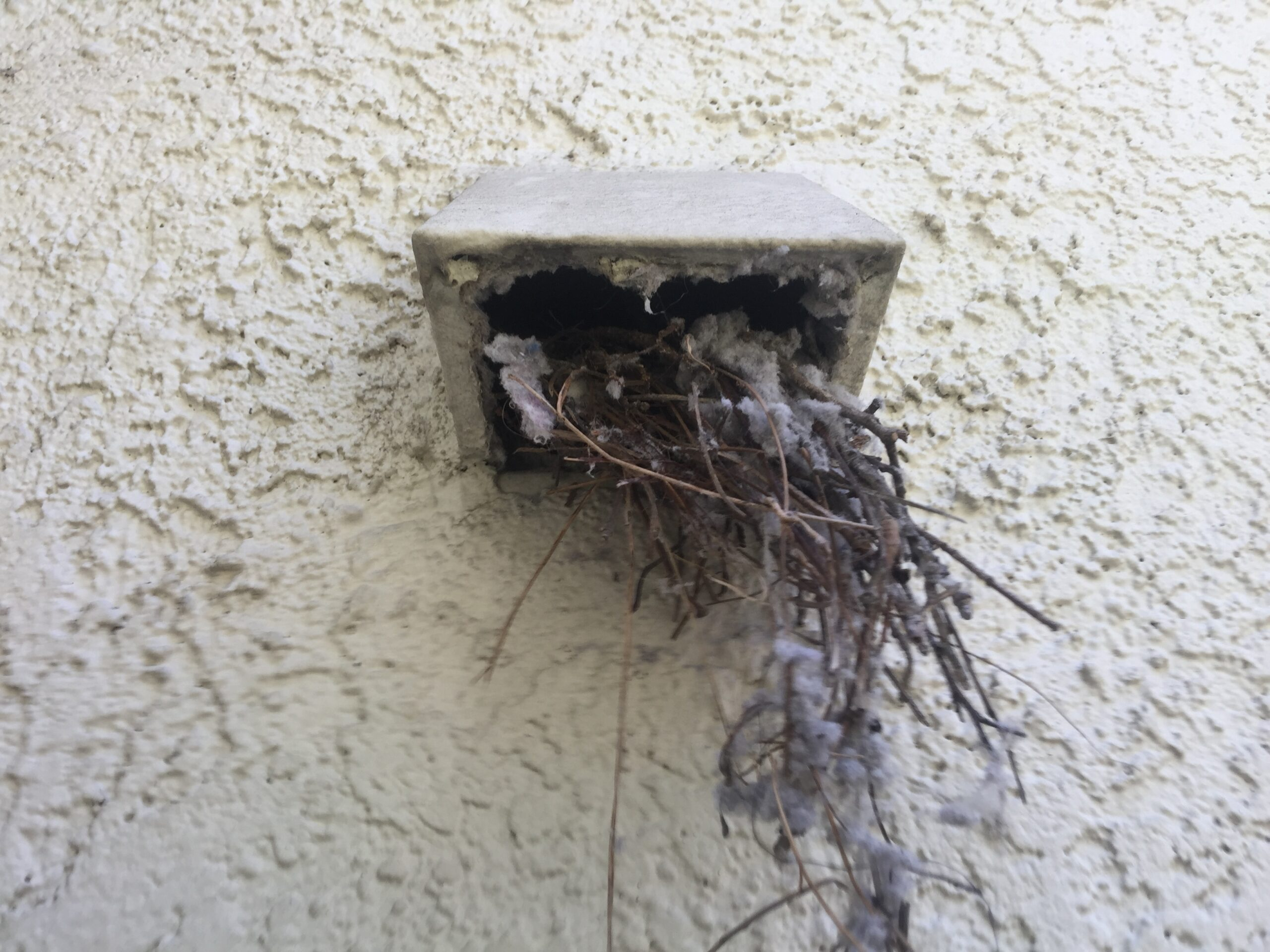 Bird Nest in Dryer Vent Tube removed by A-1 Duct Cleaning & Chimney Sweep in Orange County, CA