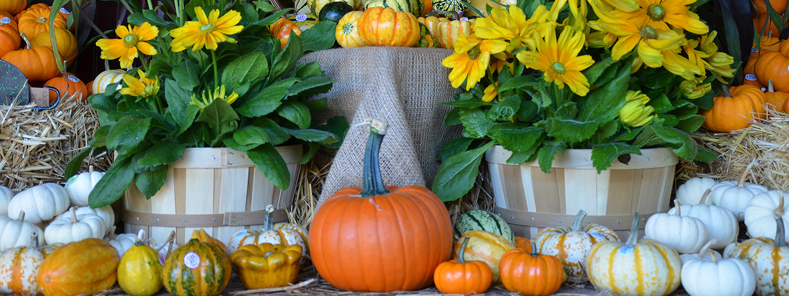 Fall flowers and pumpkins