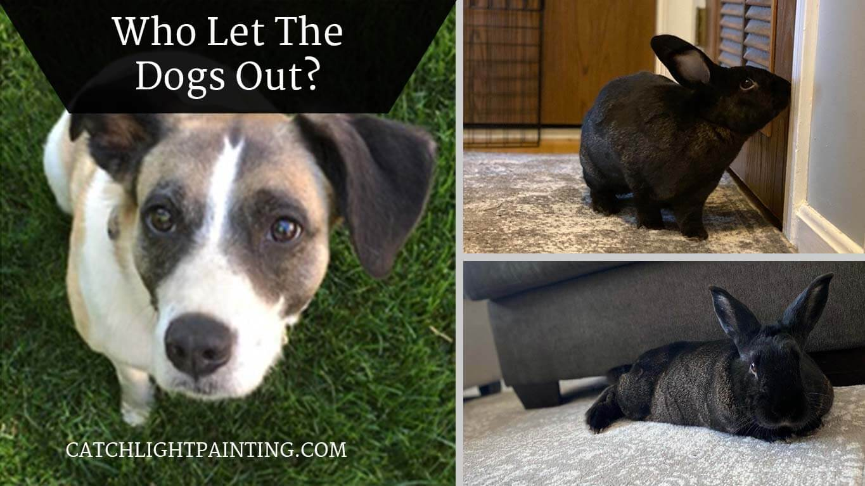 Catchlight's Office Pets