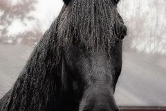 horseaj