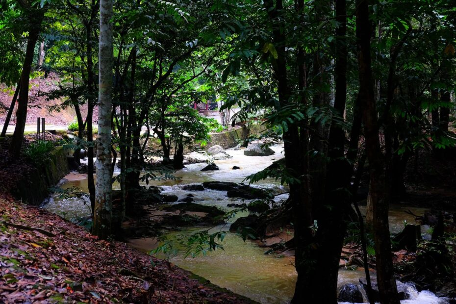 River flowing through the dense forest