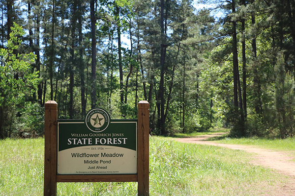 Hiking Trails & Camping in Conroe