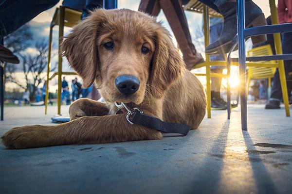 dog-friendly rv resort & restaurants in kemah