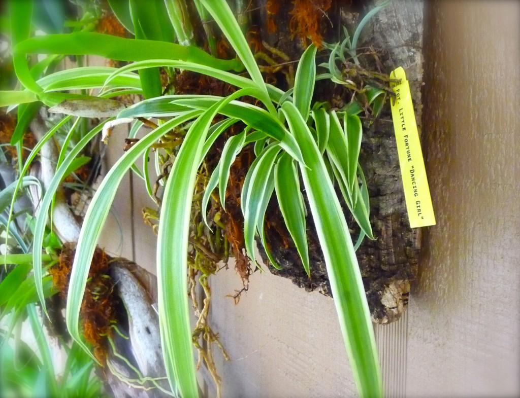 Cork Mounted Plants