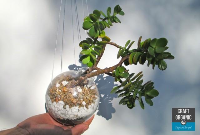 Succulent in Light Bulb Scale