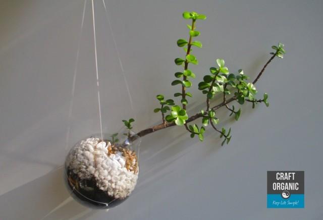 Succulent in Light Bulb 02