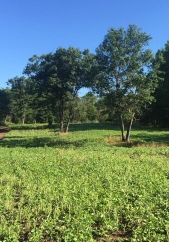 Field edges planted to have quality forage once the crops have been harvested or go dormant.