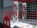 Carolina Hurricanes Inflatable Hockey Bouncer