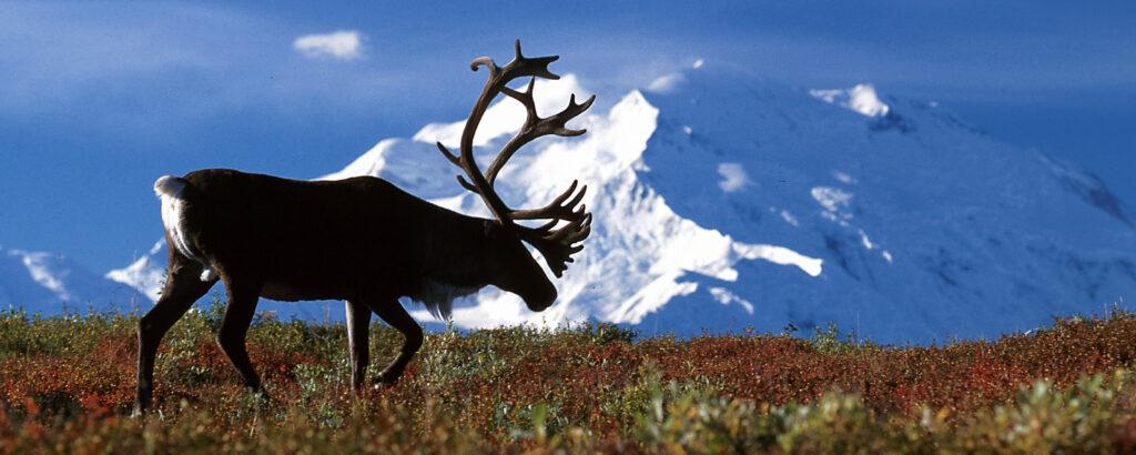 Caribou Biosciences: Small Company, Big Ambitions