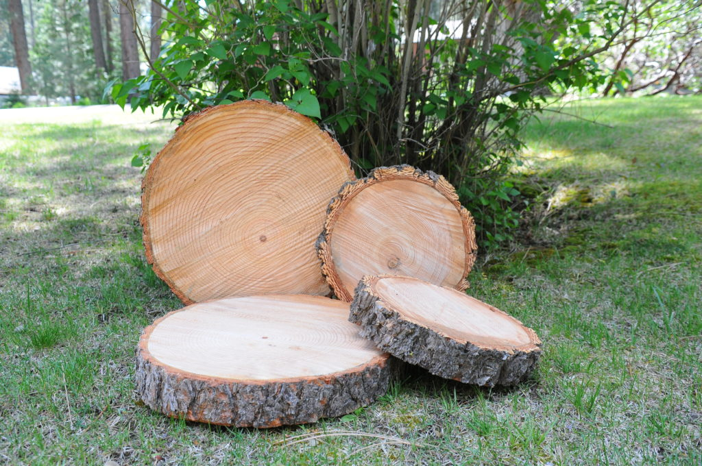 Wood rounds. Assorted sizes $5-10 ea