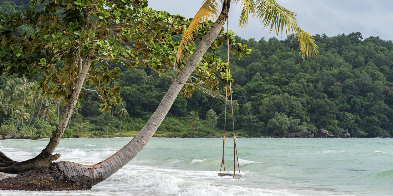 A palm tree with a swing growing on the sea shore of a sandy Bai Sao beach in Vietnam.
