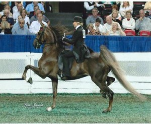 american-saddlebred-40495090992