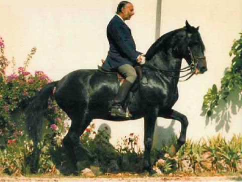 Dom Diogo De Braganca