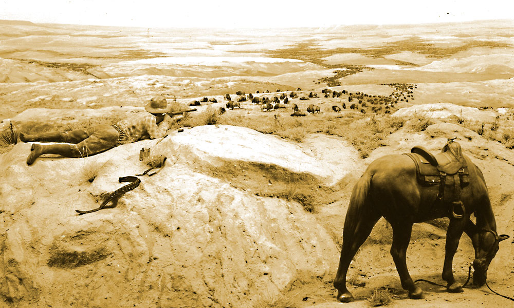 a cowboy aiming his rifle at a herd of hundreds. By the end of the 19th century, roughly 300 buffalo were left in the wild. Conservation efforts over the years have allowed the species to rebound to about 400,000 in North America today. – Courtesy National Archives and Records Administration, Scotts Bluff National Monument –