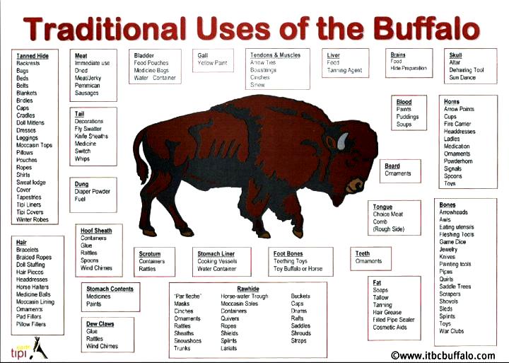 uses-of-buffalo