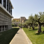 Olive grove at New Acropolis Museum