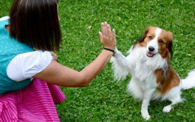 Animal Connection Workshop