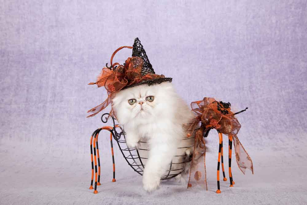 Halloween Pamper – Mini Retreat