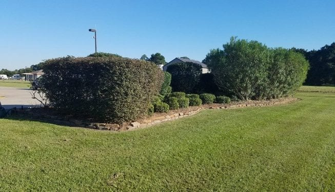 Tender Care Lawn Services | Shrub And Tree Care