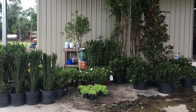 Tender Care Lawn Services | New Plants