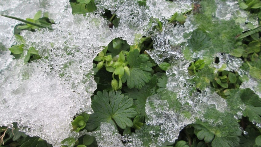 Tender Care Lawn Care Services | Landscaping Companies Tips For Plant Winter Care
