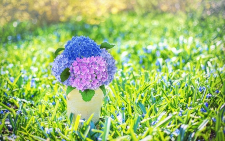 Tender Care Lawn Care Services | Pro Tips For Spring Preparation From Lawn and Landscaping Companies